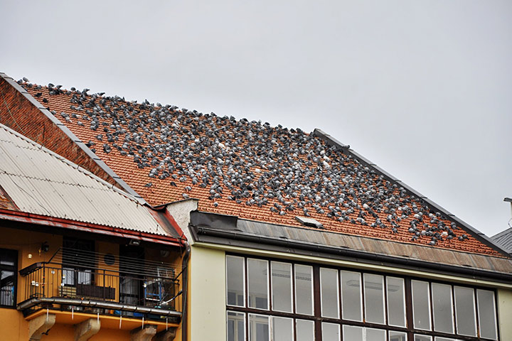 A2B Pest Control are able to install spikes to deter birds from roofs in Burgess Hill.