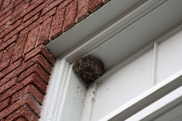 We provide a wasp nest removal service for domestic and commercial properties in Burgess Hill.